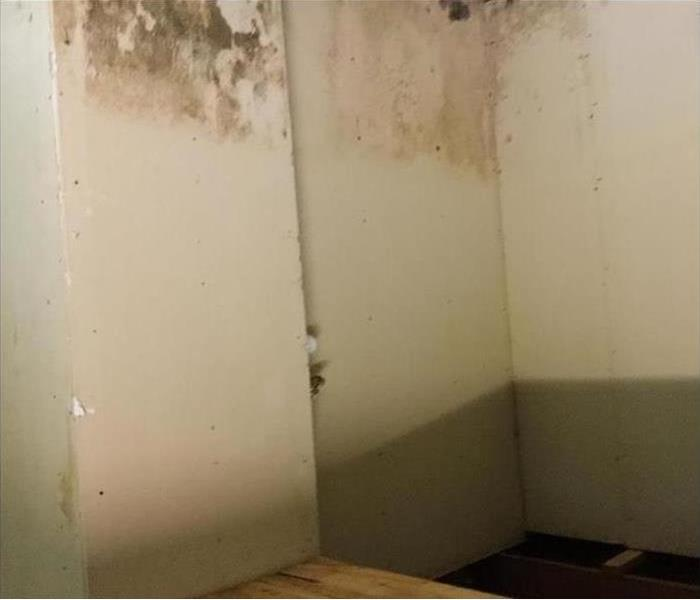 mold damage and stains on top of walls