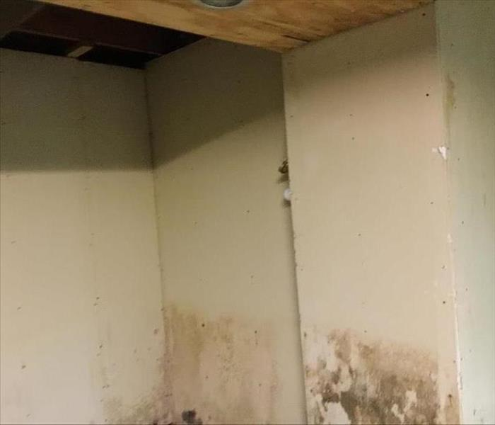 Mold Remediation Mold Remediation Services in Connecticut