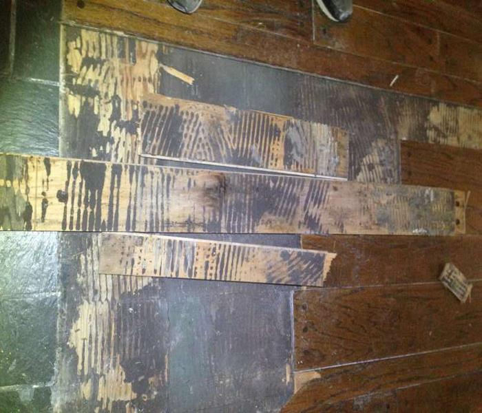 Commercial Commercial Mold Remediation